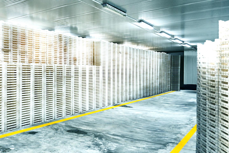 Cold Storage Management Storage & Handling Software | In-DEX WMS